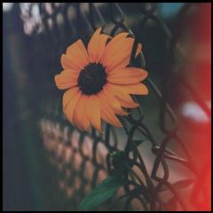 square sunflower aestethic grid tournesol freetoedit
