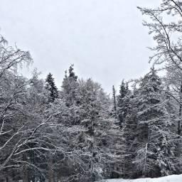 winter aesthetic winteraesthetic wintertime winterforest