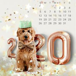 freetoedit happynewyear newyear petsandanimals calendar srcnewyear2020