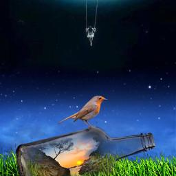 freetoedit bird wonderful world fantasy