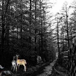 freetoedit nightfall woods path deer