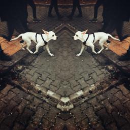 dog street mirrormania