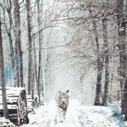 freetoedit winter snow white winterscape