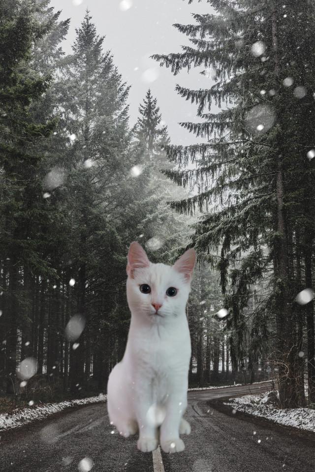 #freetoedit #cat #animal #road #winter #tree #remixed