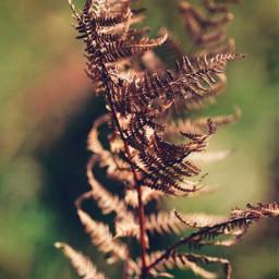 nature driedleaf fernleaf earthytones bluredbackground freetoedit
