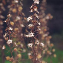 nature wildplants driedflowers bluredbackground depthoffield freetoedit