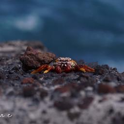 freetoedit singlestilllife tenerife crab