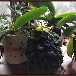 gratitudechallenge2020 myphotography nofilternoedit ipadpro plants freetoedit