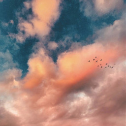 nature skyandclouds birdsinflight sunsetcolors naturephotography freetoedit
