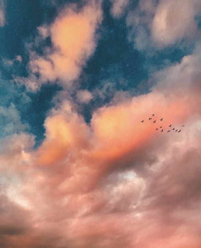 #nature #skyandclouds #birdsinflight #sunsetcolors #naturephotography  #freetoedit