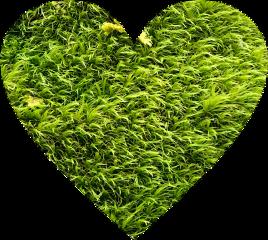 green greenasthetic nature grass heart freetoedit
