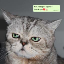 freetoedit кот кошка