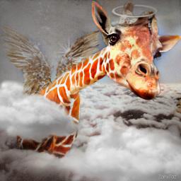 freetoedit vipshoutout giraffe photomanipulation sky