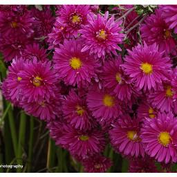 freetoedit followme follow4like flowers flowersphotography