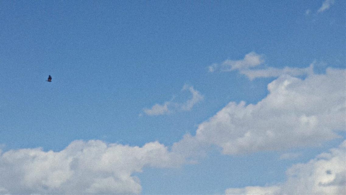 #freetoedit #sky #clouds #blue #pure #bird #freedom #wildsky #picsart  @picsart