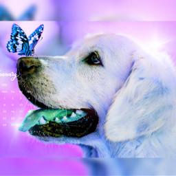 freetoedit fantastic pink dog srcjanuarycalendar