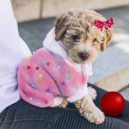 freetoedit cute puppy prettyinpink
