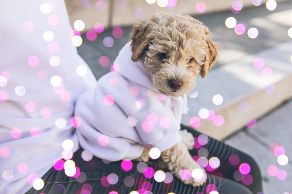 #freetoedit #dogs #bokeh #cute #remixit