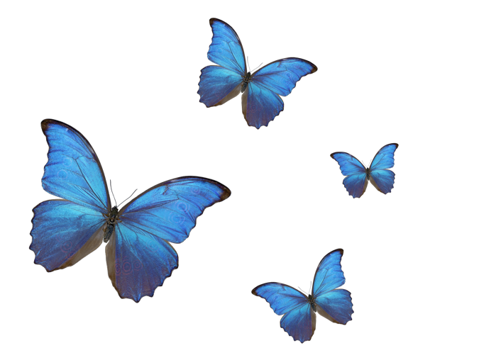 #background #bluebitterfly #butterfly #butterflys #butterflies #insect #insects #nature #colorful #trend #butterflystickers #butterfliesstickerremix #trend #fly #moodboard #freetoedit