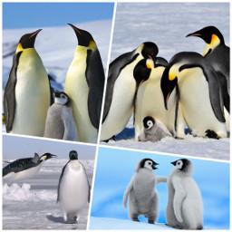 penguin emperorpenguin
