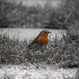 birds colorsplash mygarden freetoedit