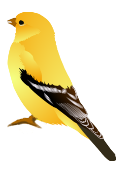 #yellow #yellowbird #animals #animal #trend #moodboard  #love #nature #sticker #stickers #ftestickers #bird #birds #fly #peces #freedom #freetoedit