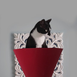 freetoedit cat lampshade catsofpicsart walldecor scissors scissorsstickerremix scissortool