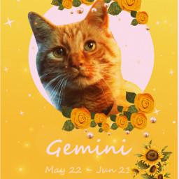 freetoedit cats yellow eczodiac zodiac