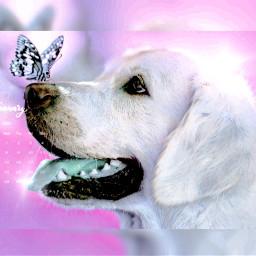 freetoedit pinky doglove