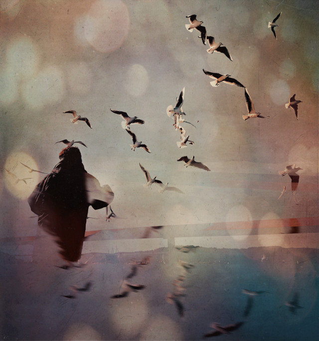 #seagulls #beauty #beautiful #flying #seaside
