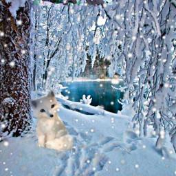 bird fox tree snow water freetoedit
