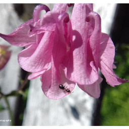 freetoedit followme insect insectphotography insect_perfection