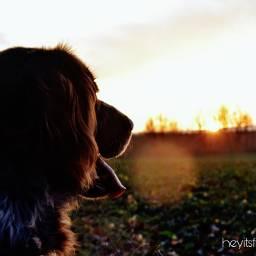 dog sunset petsandanimals nature