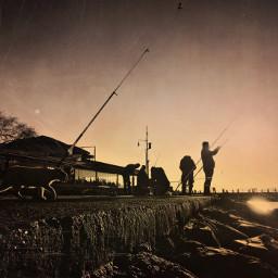fisherman cat seaside sunnydays