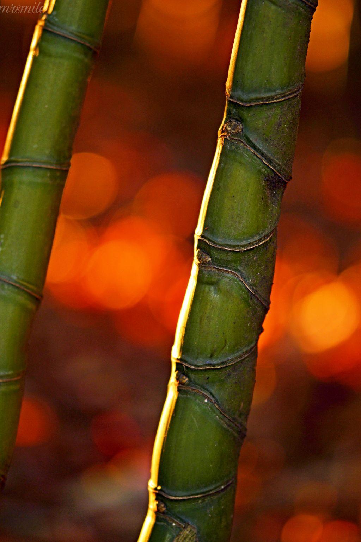HAPPY SUNDAY DEAR FRIENDS💙 #photography #naturephotography #nofilter #sunset #freetoedit