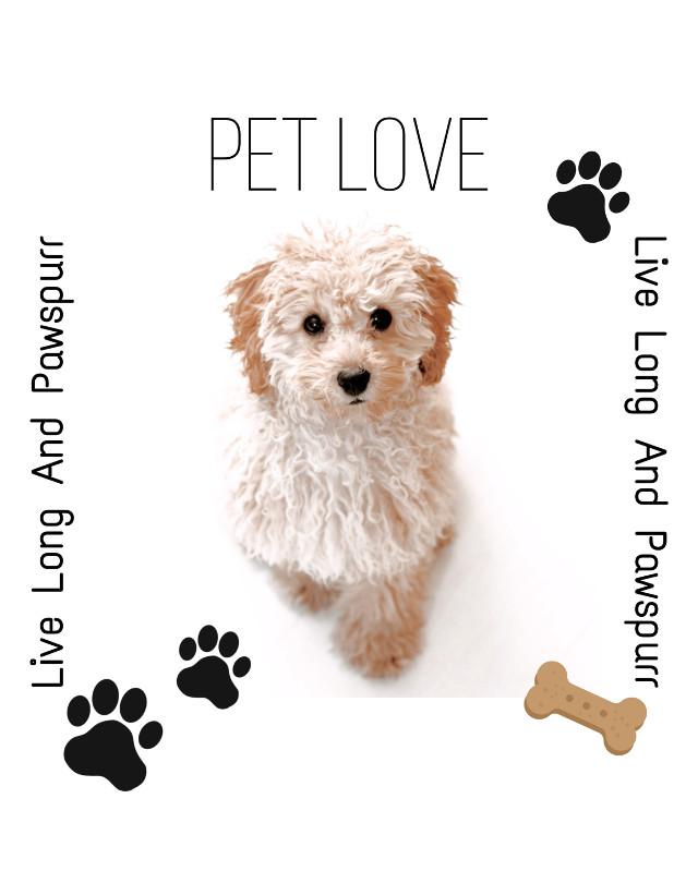 #freetoedit #puppy #love ❣❣