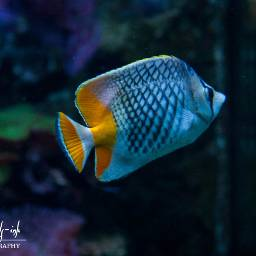freetoedit fish sealife aquarium petsandanimals