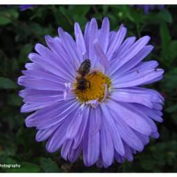 freetoedit followme floweroftheday flower photooftheday