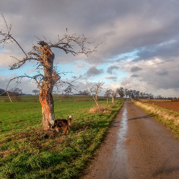 photography landscapes sky dogsofinstagram mydog freetoedit