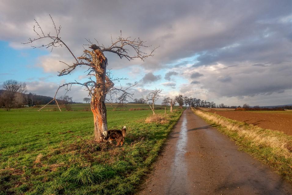 #photography #landscapes #sky #dogsofinstagram #mydog #tree  #freetoedit