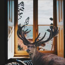 freetoedit imagination surreal animal nature