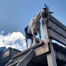 freetoedit goat farm pctheblueabove theblueabove