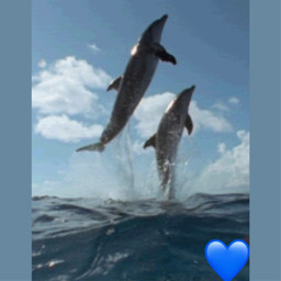 freetoedit dolphins