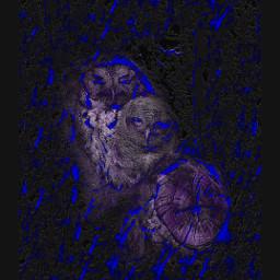 freetoedit art owel blue mystyle