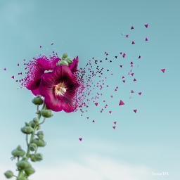 freetoedit dispersiontool dispersion purple flower op