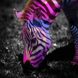 freetoedit neon photography animal madewithpicsart