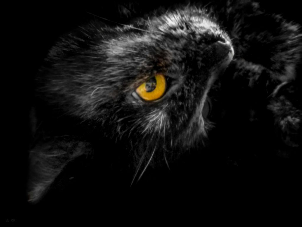 #photography #cat #mycat #petsofpicsart #catsofpicsart #blackandwhite #colorsplash  #freetoedit
