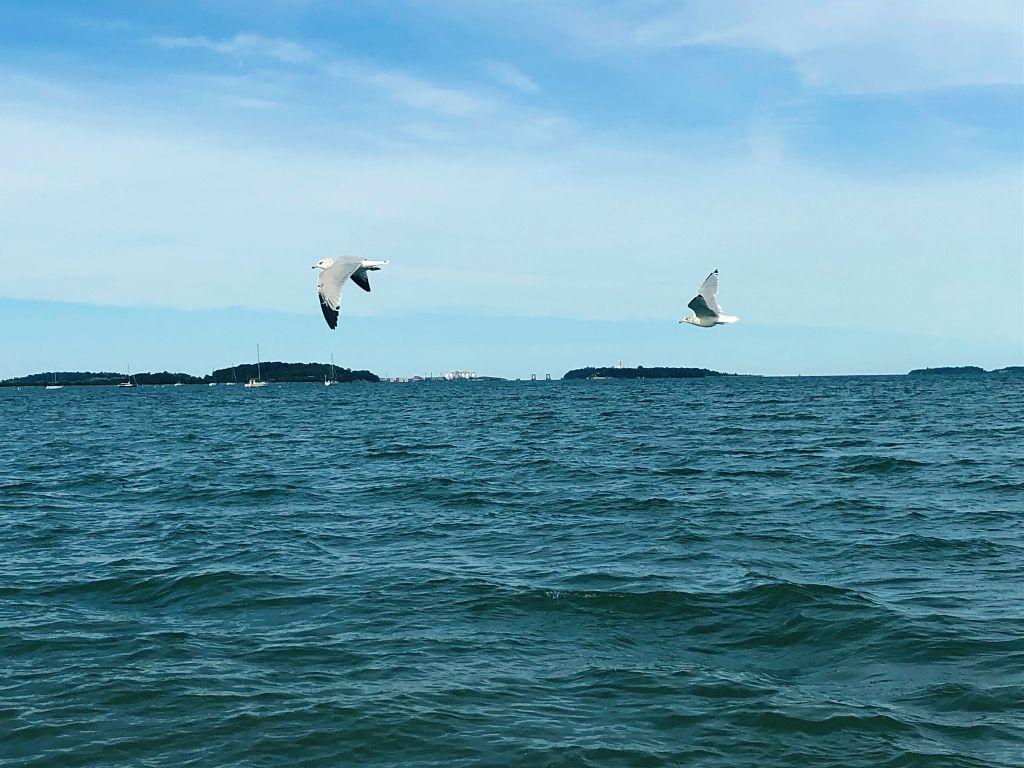 Have a wonderful day all! #seagulls #birds #blue #sea #horizon #birdsinflight #blue #freetoedit