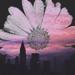 city tawors cityremix flower flowerphotography