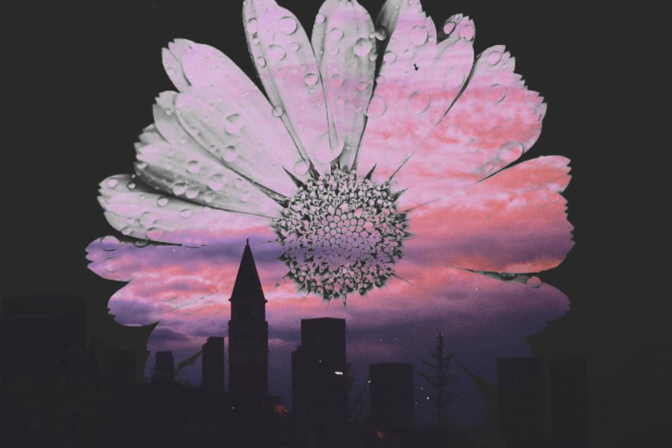 #city #tawors #cityremix #flower #flowerphotography #flowercrown #flowerselfie #flowerincity #flowershot  @picsart